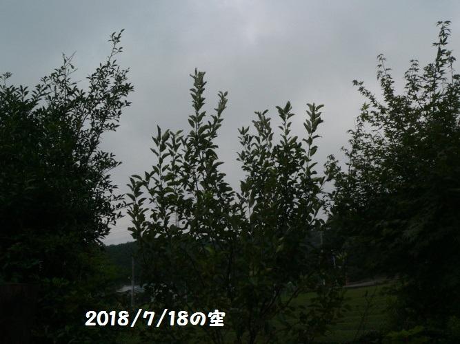 P1400648_1.jpg