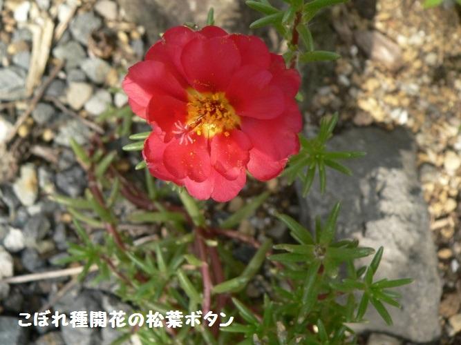 P1400663_1.jpg