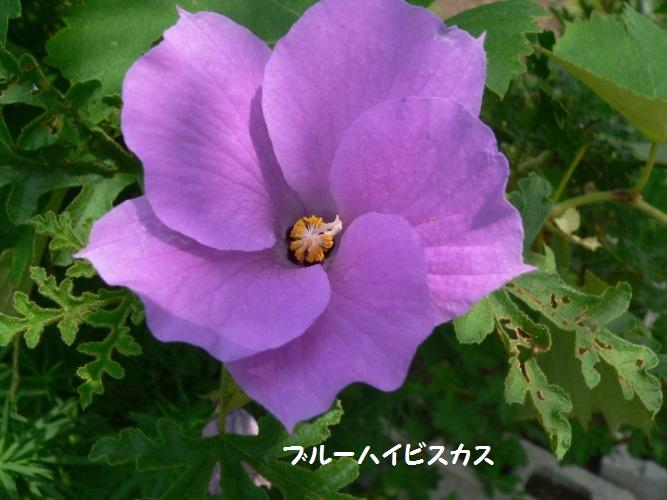 P1400810_1.jpg