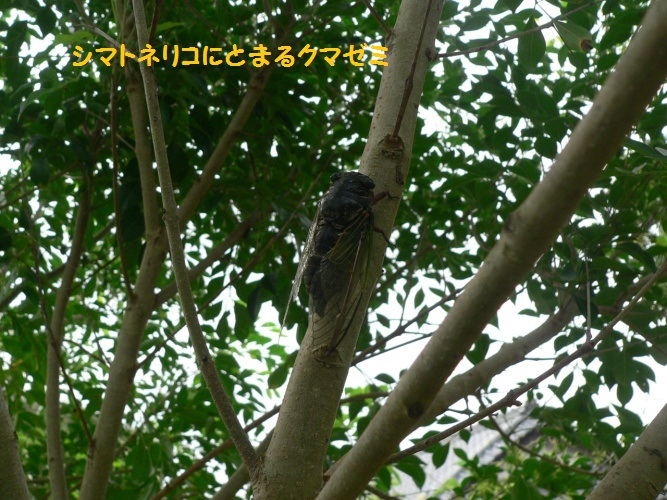 P1400839_1.jpg