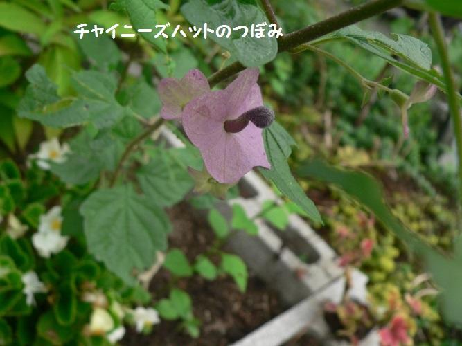 P1400851_1.jpg