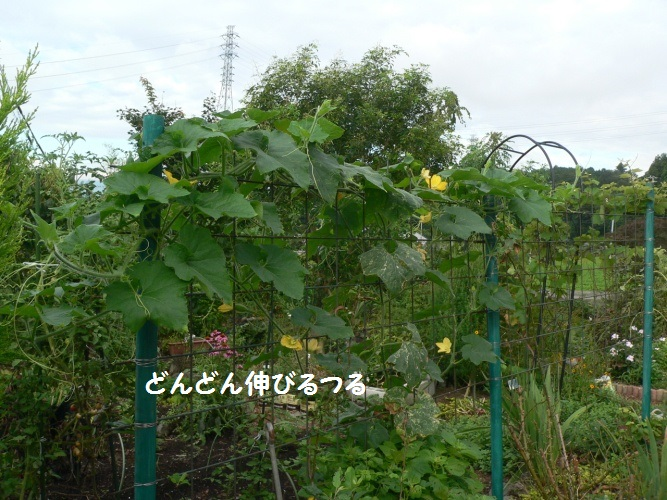 P1400887_1.jpg