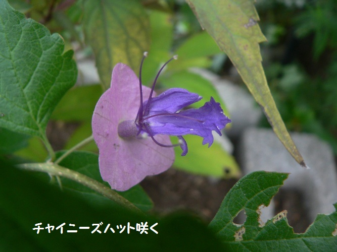 P1400894_1.jpg