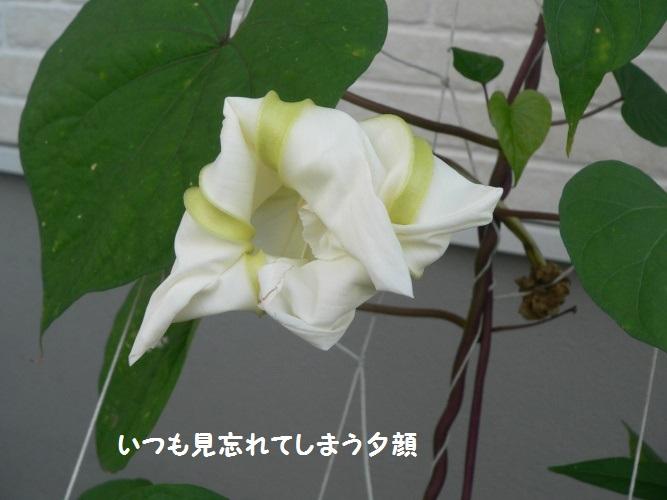 P1400901_1.jpg
