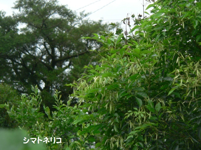 P1410059_1.jpg