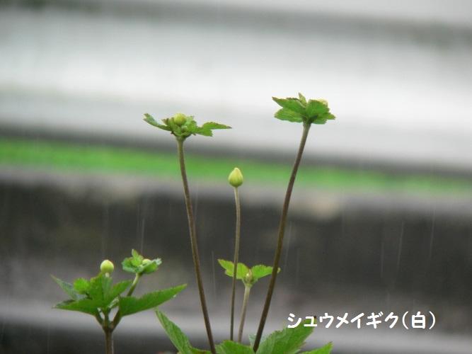 P1410105_1.jpg