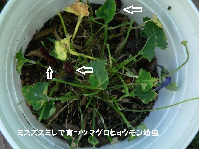 P1410119_1.jpg