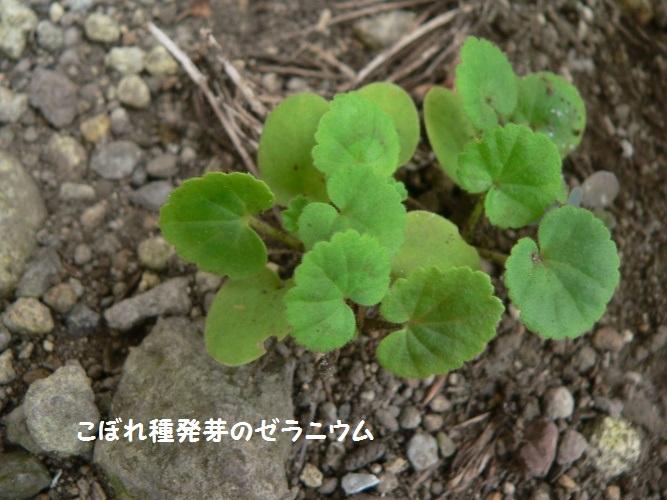 P1410190_1.jpg