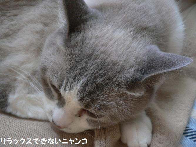 P1410386_1.jpg