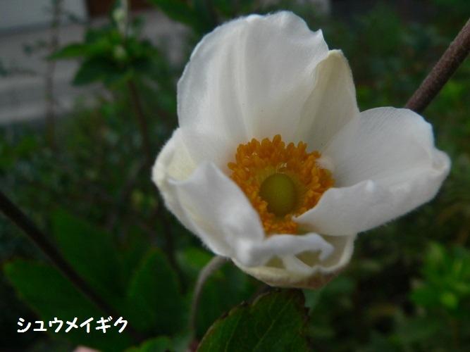 P1410399_1.jpg
