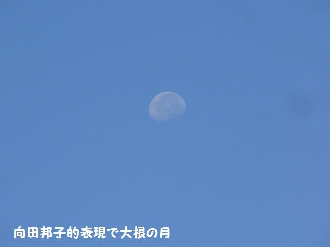P1410434_1.jpg