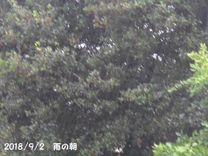 P1410466_1.jpg