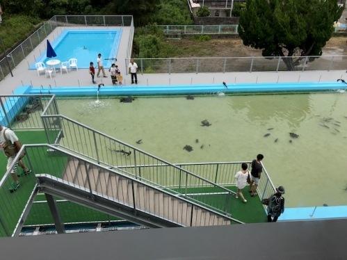 pool_1850.jpg
