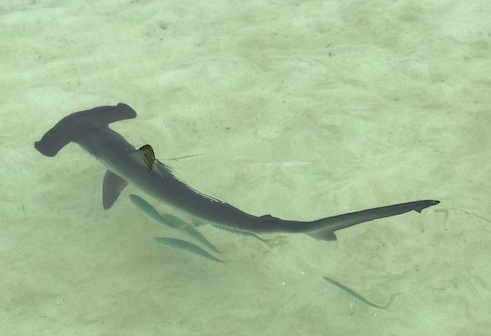 shark_1853.jpg