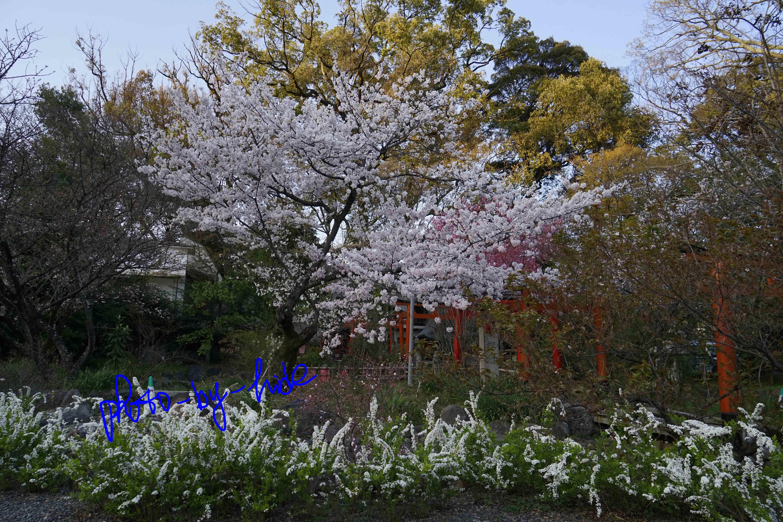 平野神社3