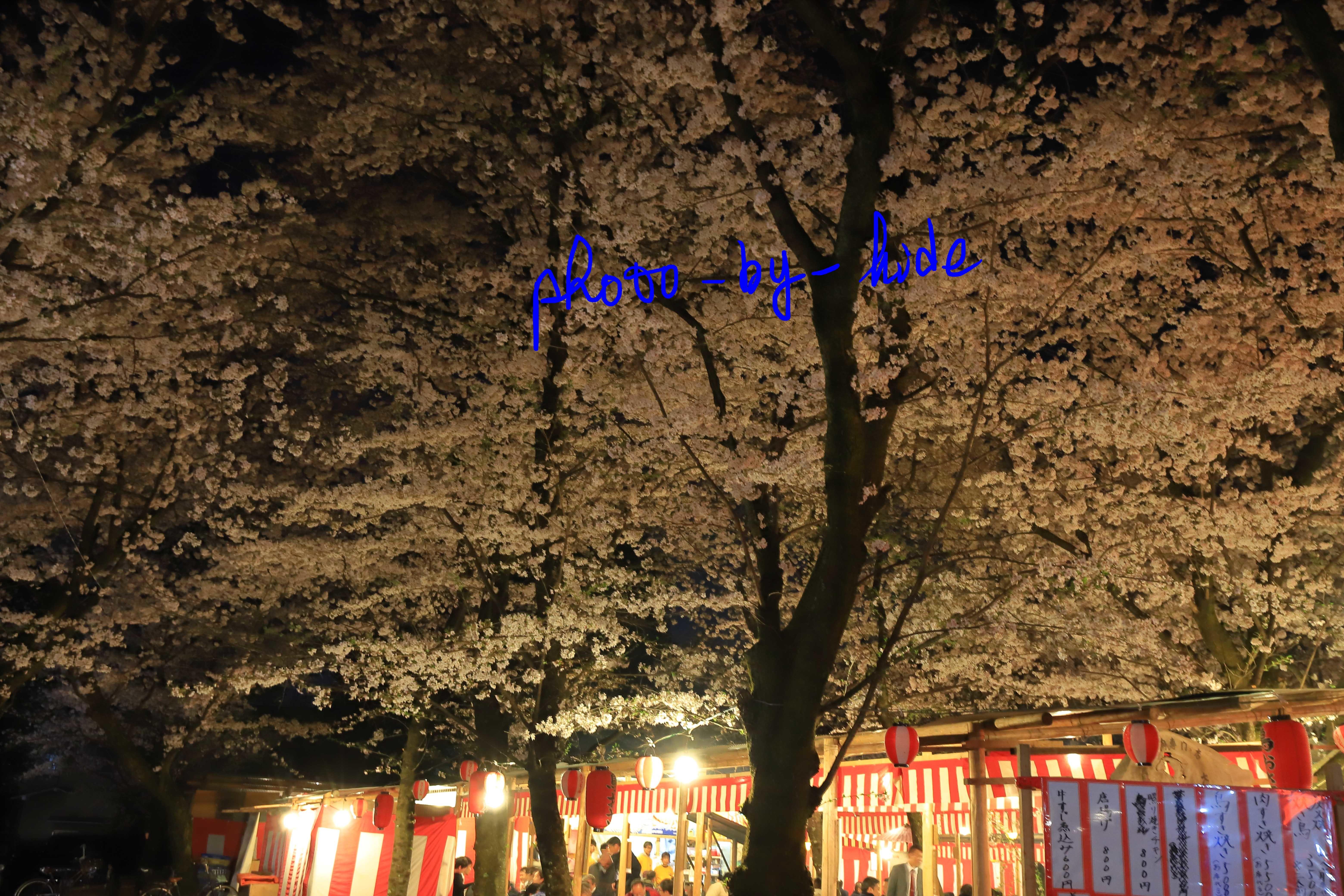 平野神社11