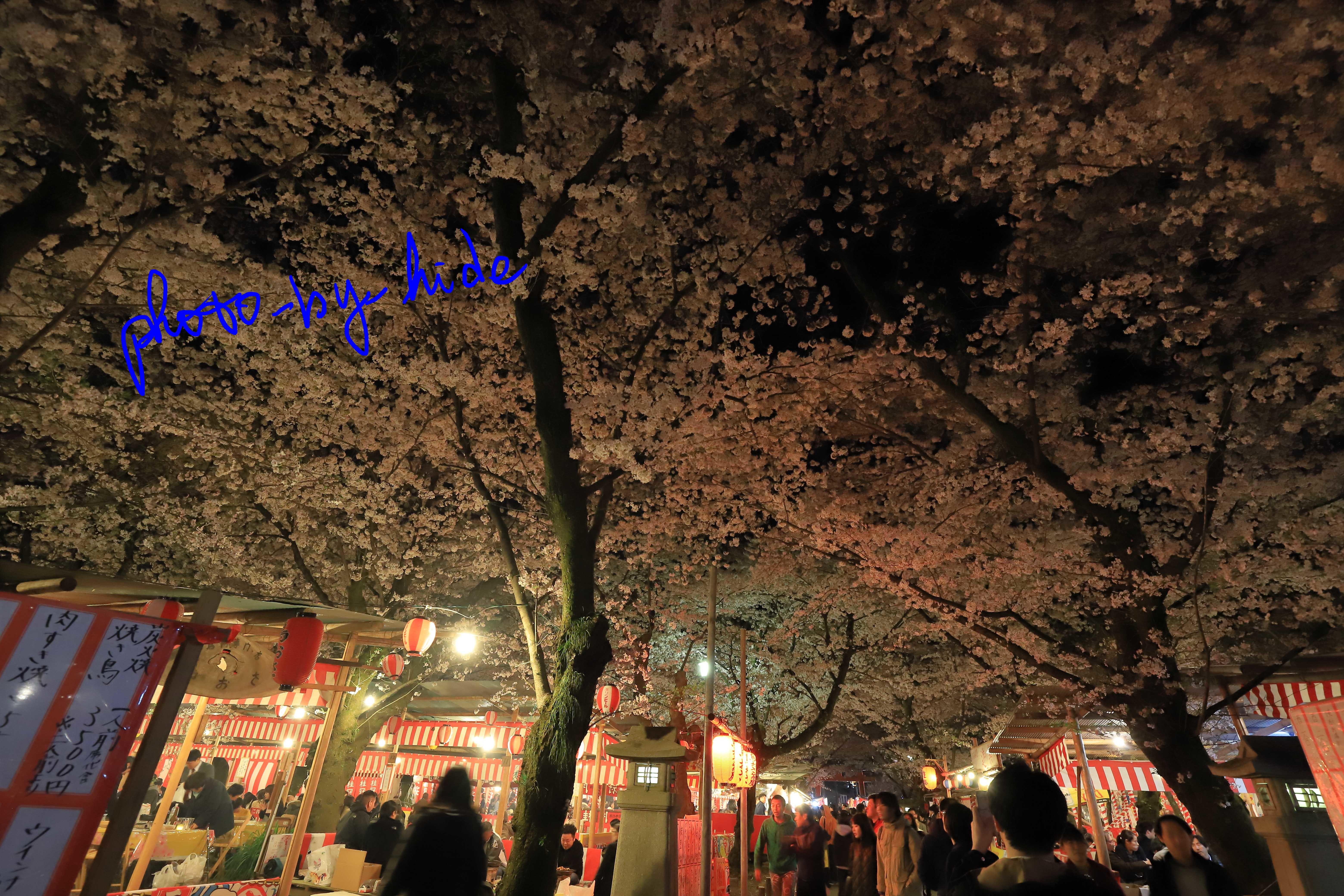 平野神社13_edited-1