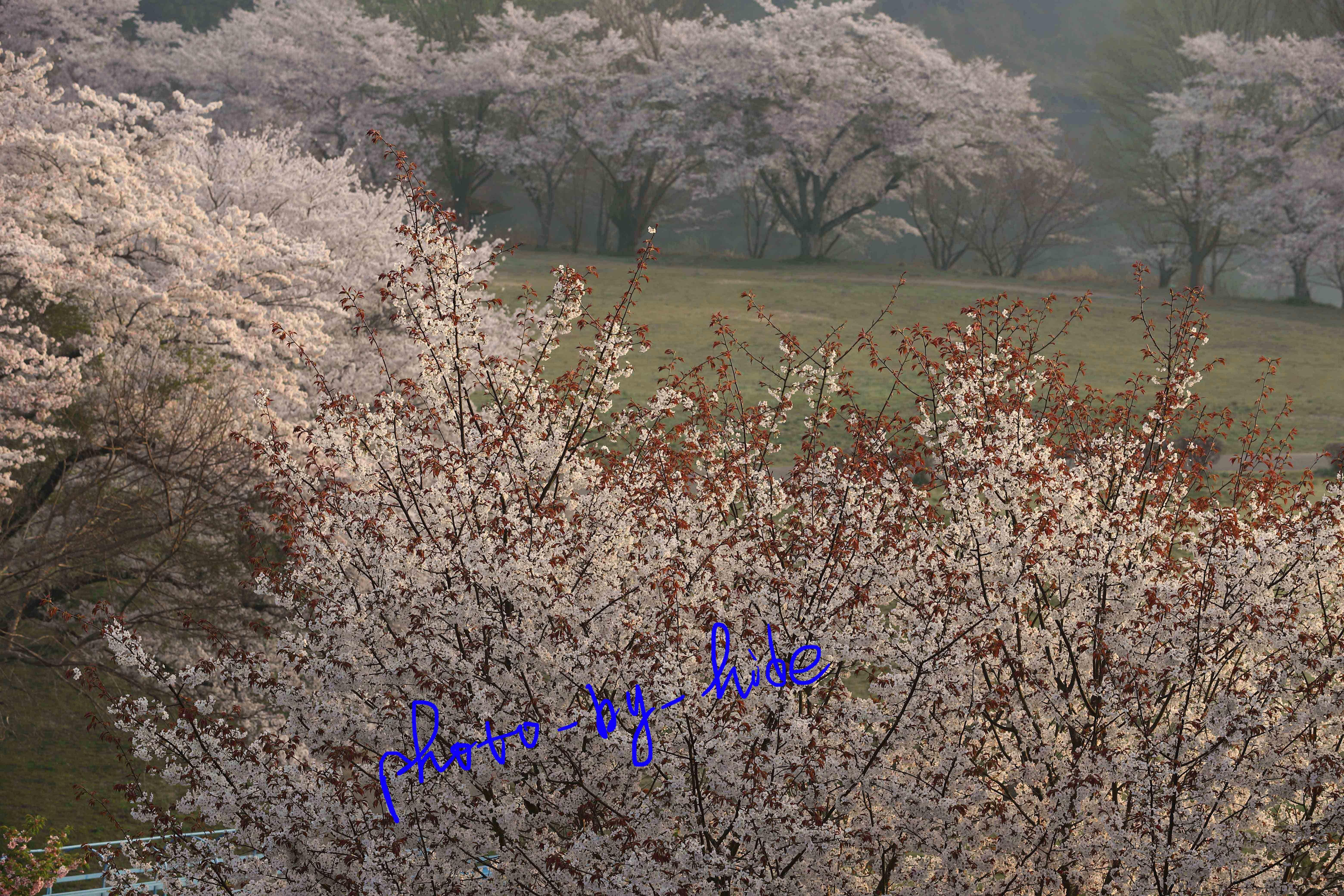 月ヶ瀬6_edited-1
