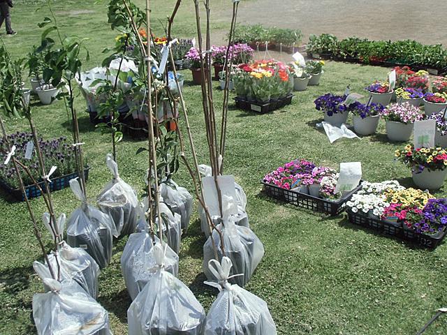 お花園芸売り場