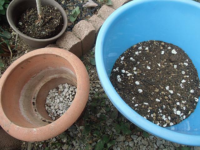 鉢と配合土