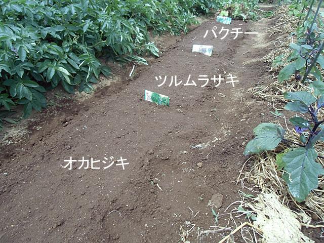 南方野菜の種をまきました