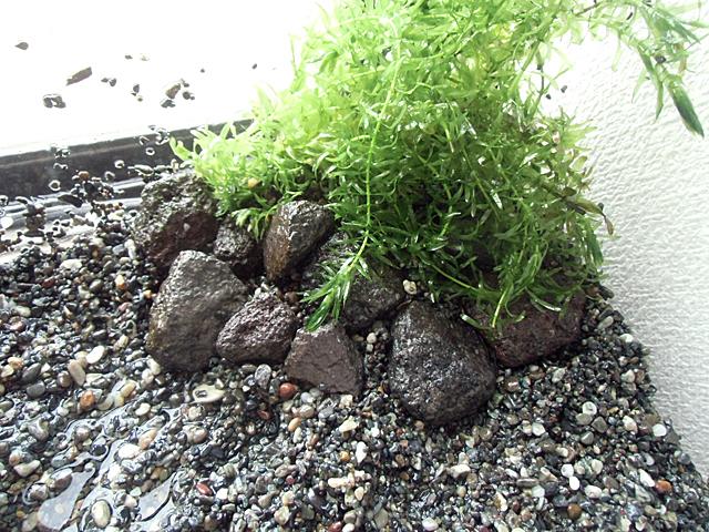 草を石で固める