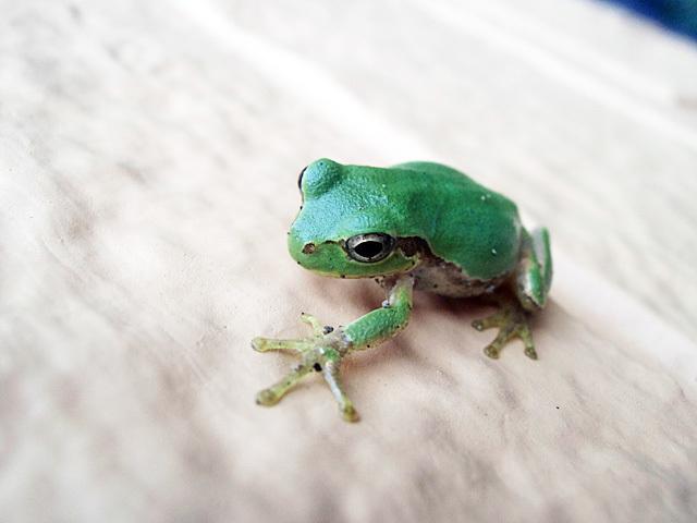 若いグリーン