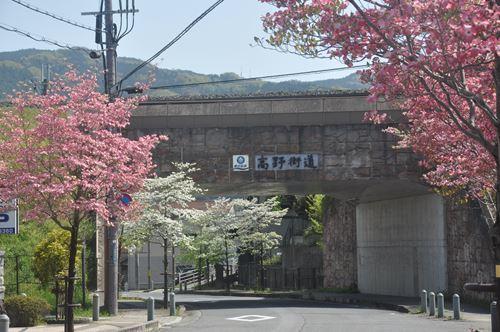 hanamizuki201804005_R.jpg