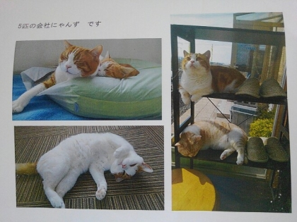 Y・T会社猫