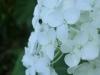 平成30年7月お花