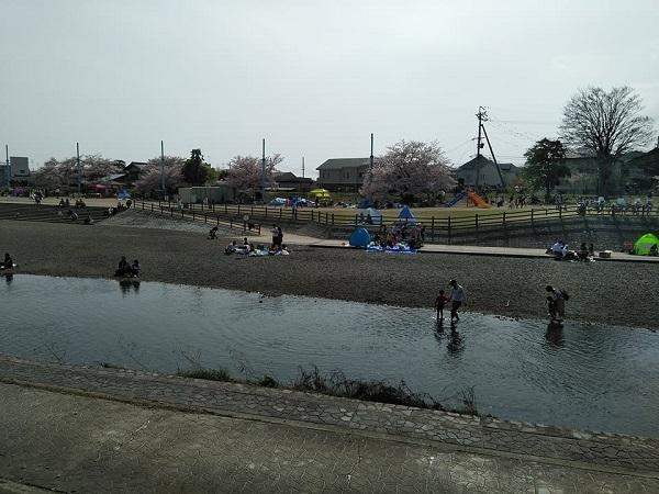 0409桜5