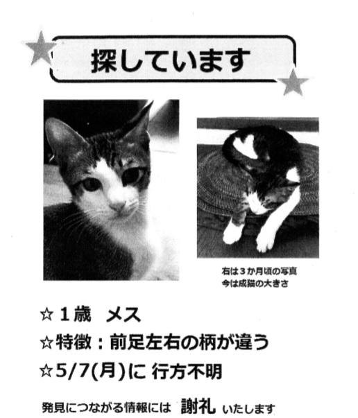 迷子の猫ちゃん20180522