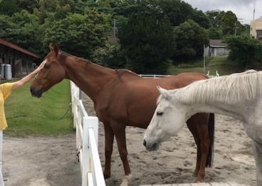 霧島乗馬クラブ1