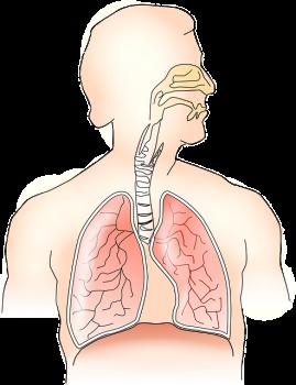 禁煙呼吸とその応用で肺を強化します サードアイ朱雀