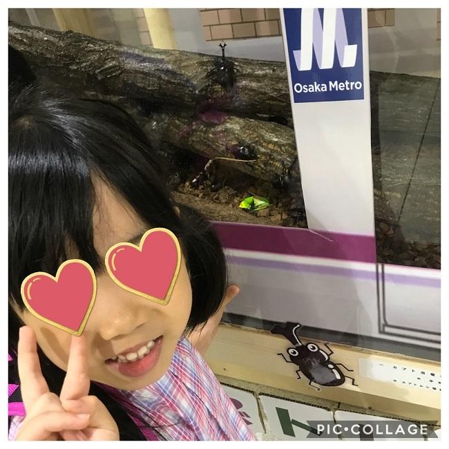 駅でカブトムシを発見