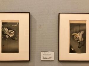 小原古邨展 花と鳥のエデン-10