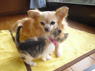 メリーと仔猫