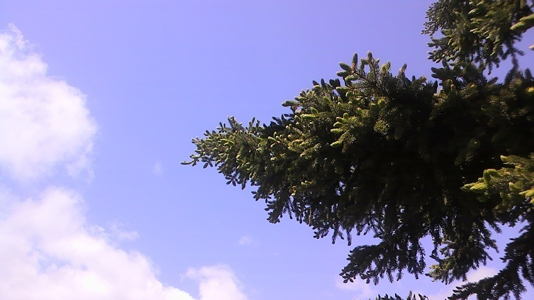 初夏の新緑樹木