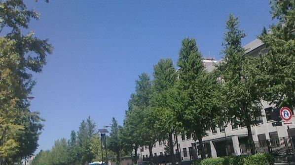 国会青空緑