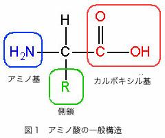 amino_acid.jpg