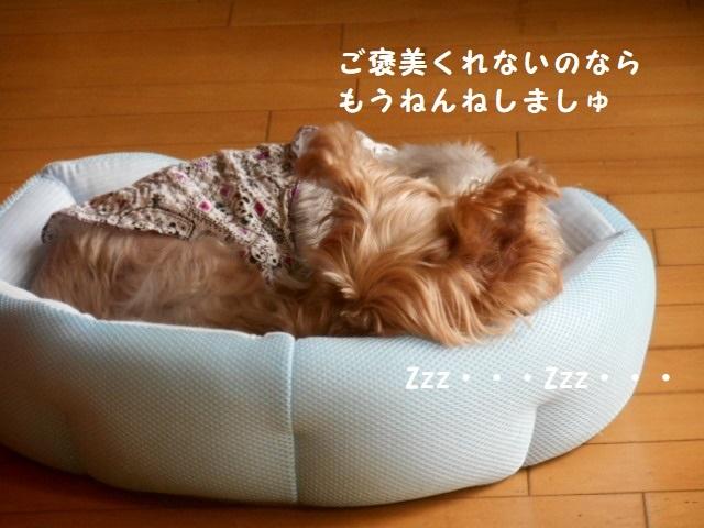 DSCN7888.jpg