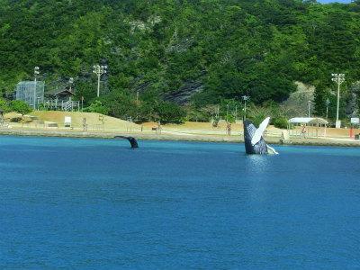 クジラさんのお迎え