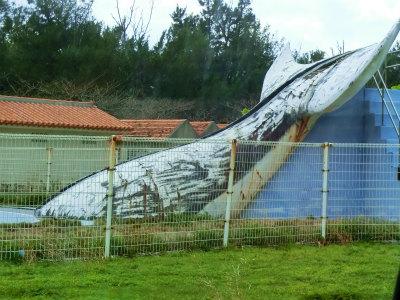 プールにクジラさん
