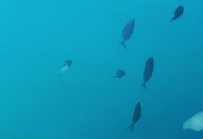 すぐ近くにお魚-crop