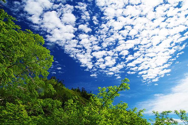 武尊山の空と森
