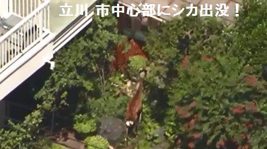 deer_01_ 1