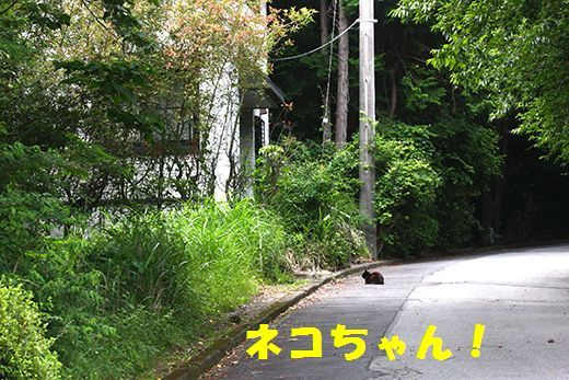 IMG_0142__.jpg
