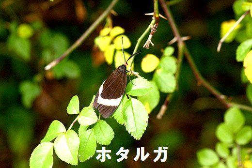 IMG_0343__.jpg