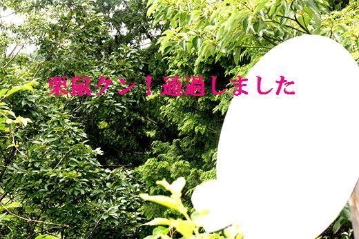 IMG_0577_.jpg