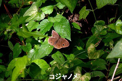 IMG_1364__.jpg
